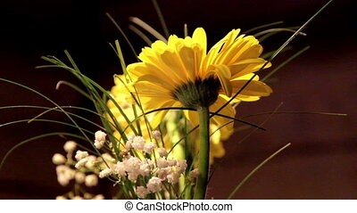 Sunflowers Yellow Daisies in a Vase - Yellow daisies in a...