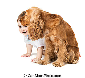 baby hides behind the dog - joyful baby hides behind the dog