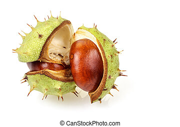 Horse chestnut in opened natural shell - Horse chestnut...