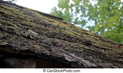 Wooded Roof of the hut that is organic is covered in Moss -...