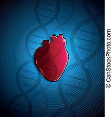 Heart and DNA - Human heart anatomy and DNA spiral at the...