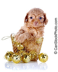 Puppy in a wattled basket with New Year's balls. Puppy of a...