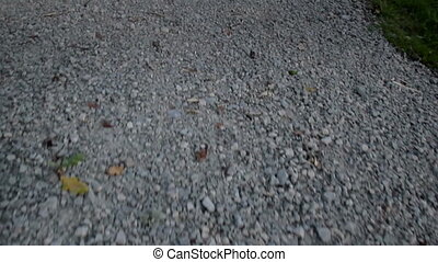 Oak and Pebbles Bermuda grass on the ground - Several...