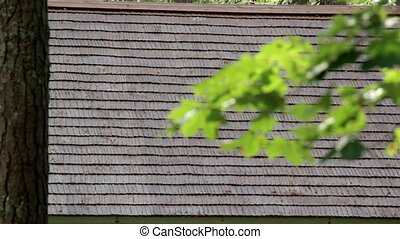 Leaves on the branch and wooden shingle roof from afar. The...