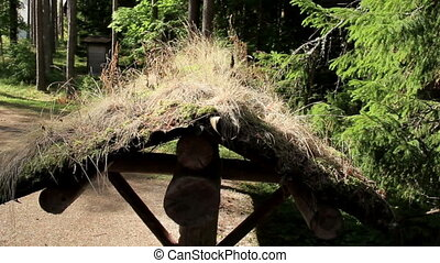Grasses growing on the eco roof of the cabin log - The eco...
