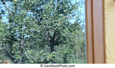 Reflection of trees in the log house glass wooden window -...