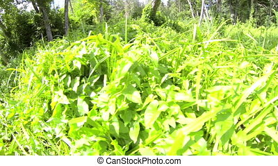 Plenty of shrubs bushes grasses and some trees in the area -...