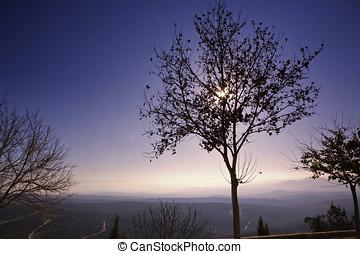 arbre, aube,  silhouette, espagne