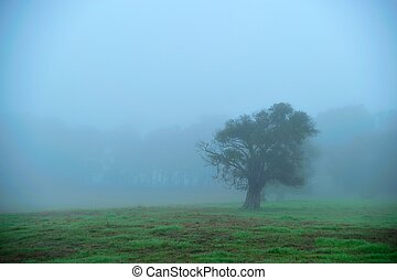 foggy morning field 1 - bushy tree in grassy field on foggy...