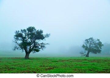 foggy morning field #2 - bushy trees in grassy field on...