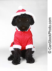 Upset Black Russian Terrier Puppy in Santa Suit - Black...