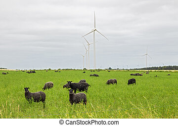 Sheep on green pasture, with wind turbines in a distance