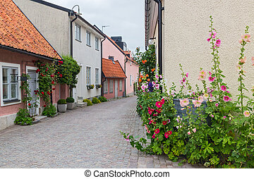 Cozy street with blooming mallows and roses
