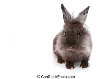 One Bunny Rabbit on White Background