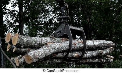 Backhoe carrying birch logs to the truck - Backhoe carrying...