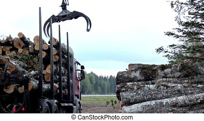 Arranging the cut trees at the back of the truck lifting of set of logs