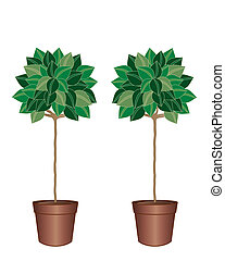 bay tree - an illustration of a pair of decorative bay trees...
