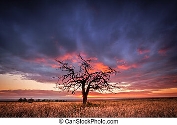 Gnarly Tree - Silhouette of a tree in the Flinders Ranges,...