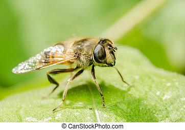 insecto, trabajando, abeja