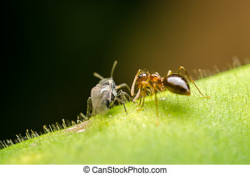 Insects On Green Leaf Talking Conce - Ant And Small Wasp...