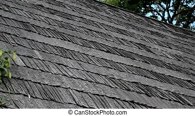 Old cedar wooden shake shingle roof of the hop Humulus in...