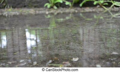 puddle water rain drop - puddle pool water and air bubble...