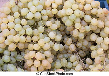 Bunches of grapes. - Fruits are magnificent and very useful...