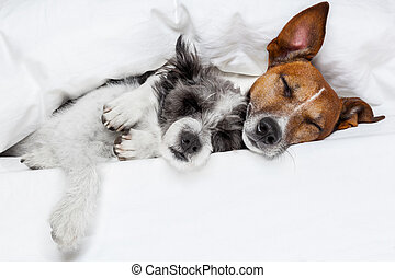two dogs in love sleeping together in bed