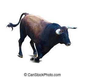 Running black bull, isolated over white background with...