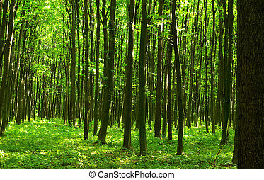 forest  - Trees in a  green forest