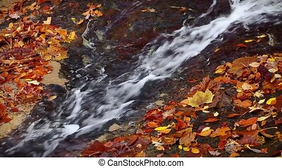 Autumn Leaves and Flowing Water Loop - Whitewater cascades...