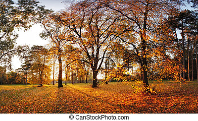 Autumn panorama in park with a sun