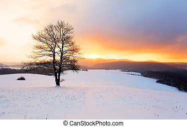 Winter mountain landscape with tree at sunset