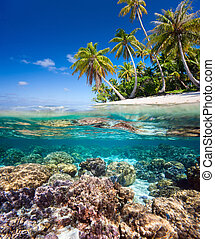 Tropical island - Beautiful tropical island in French...