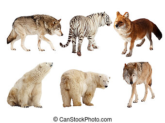 Set of Carnivora mammal over white