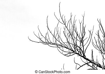 Dry twigs. - Twigs on a white sky background.