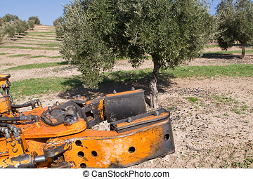Olive collection, Jaen, Spain - Vibrating machine in an...