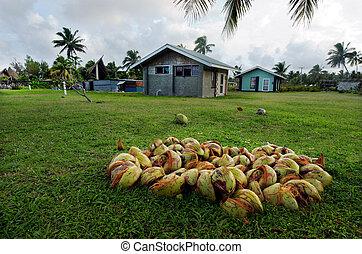 Coconut Tree in Aitutaki Lagoon Cook Islands - AITUTAKI -...