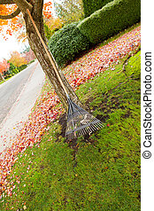 Fan Rake leaning on Maple Tree during Autumn Season -...
