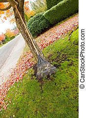 Fan Rake leaning on Maple Tree during Autumn Season -...