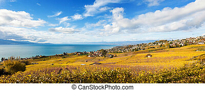 Vineyards in Lavaux region - Terrasse de Lavaux, Switzerland