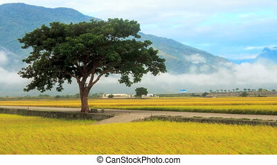 Time lapse of beautiful paddy with nice mountain in the...