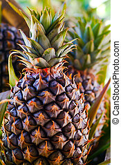 Pineapples together at grocery store. - Pineapples together...