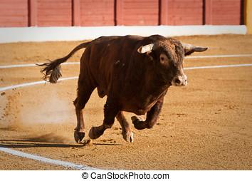 gevangen nemen, figuur, dapper, stier, Bullfight, Spanje