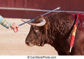 el, español, torero, david, Valiente