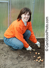 woman sets onion - Young woman sets onion in soil at...