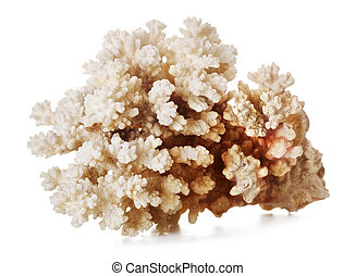 Beautiful Coral - beautiful gray coral, isolated on white...