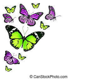 Green violet different butterflies flying, isolated on white...