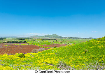 Golan Heights - Rows of Vines on the Field in Golan Heights,...