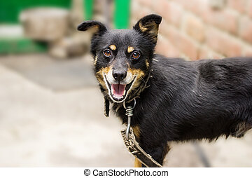 A good dog on a leash